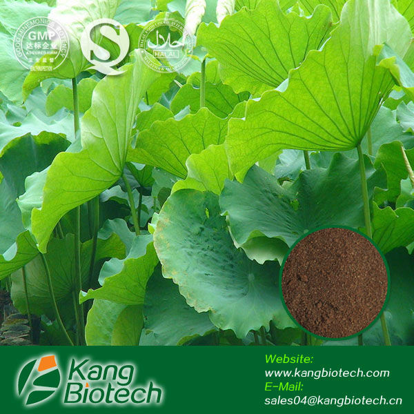 Nuciferine/Flavonoides/1%-98% spec.powder/lotus leaf extract powder slimming capsule