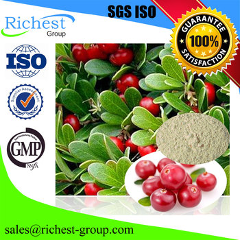 Factory Offer Low Price Arbutin Extract Powder