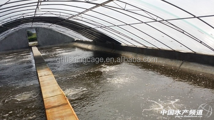 Tilapia indoor fish farming in china buy indoor fish for Indoor fish farming