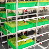 Full Automatic Green Grass | Wheat | Maize | Barley Fodder | Forage Growing | Sprout Machine | Systems | Solutions With Tray