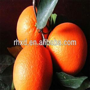 Import fresh navel orange mandarin orange from China
