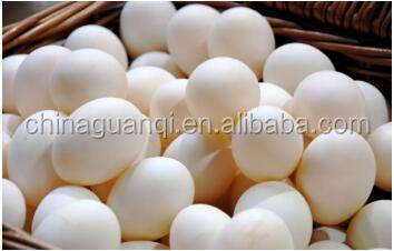 Egg/white/brow/farm chicken/50-55g