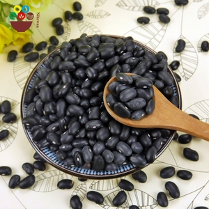 Small black kidney beans turtle bean with low price
