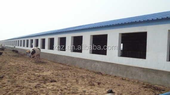 low cost advanced automated equipment dairy farm steel structure shed for milk cow