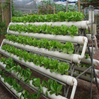 Soilless agriculture vegetable aquaponics systems deco for Soil less farming
