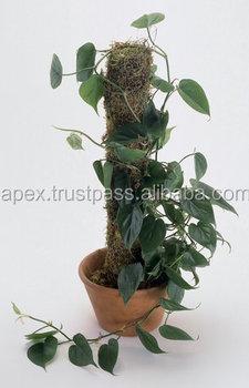 Decorative Plant Pots Indoor In India - Buy Coco Poles Exporters ...