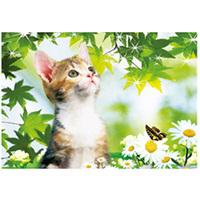 2016 PET Material HD 3d Cute Cat Picture