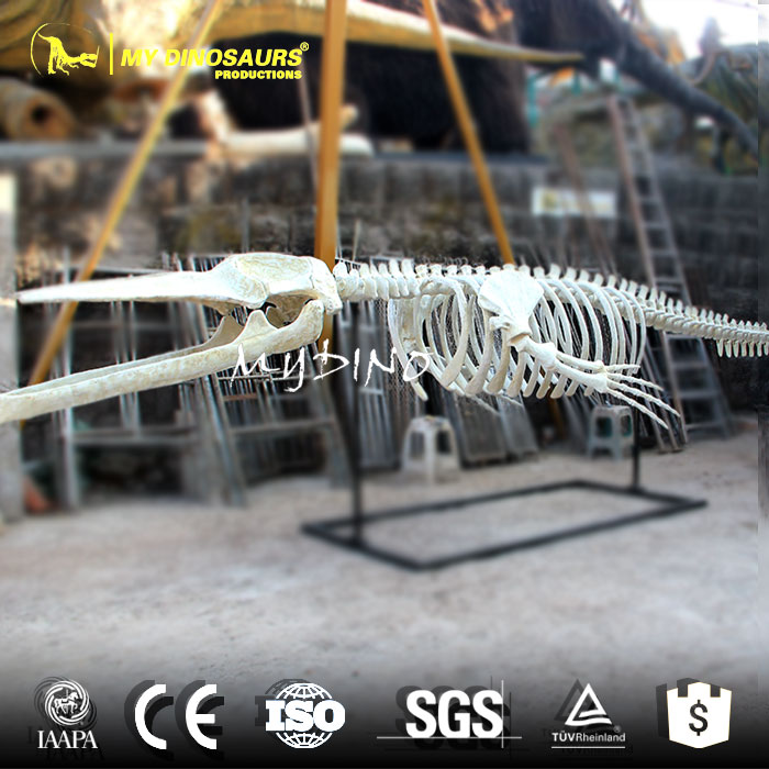 MY DINO-DSS054 Oldest Animal Fossils for Sale