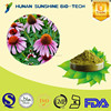 Herbal extract immune booster Echinacea purpurea P.E. powder 0.5%-10% chicoric acid