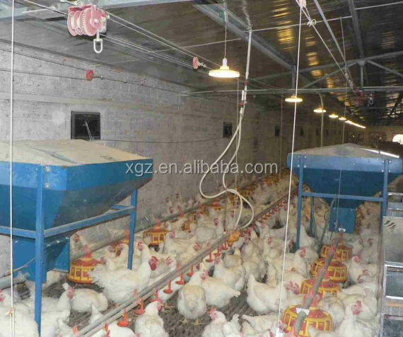 low price advanced automatic chicken egg layer house