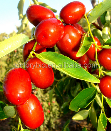 100% natural Jujube Extract Chinese Date extract