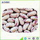 Wholesale LSKB/Light Speckled Kidney Beans , Mexican Kidney Beans