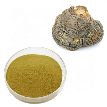 High quality phellinus linteus mushroom extract powder 10 percent polysaccharide
