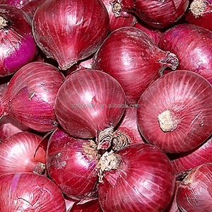 Wholesale red onion price for onion importers Malaysia