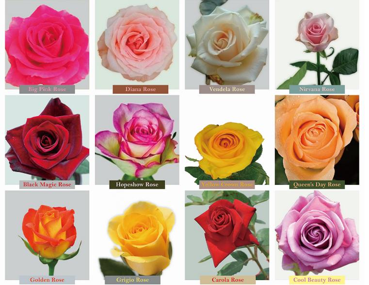 Professional Export Hot Sale Fresh Pink Rose Flower Flower Rose