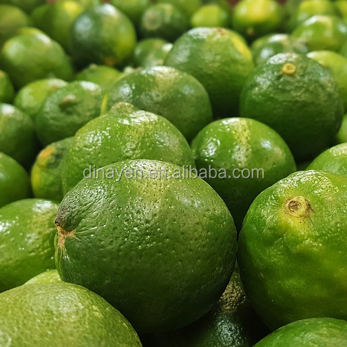 China Green Lime from China with high quality and best price