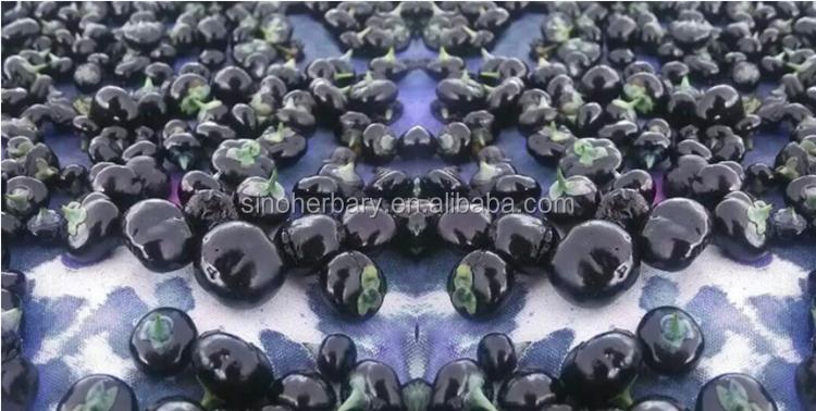 2019 de alta calidad negro wolfberry/Negro goji berry