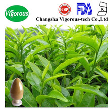 oolong tea leaf extract/ oolong tea leaves extract/oolong tea 90% polyphenols