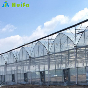 agriculture commercial used large multi-span PE film green house for tomato