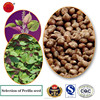 Brown Perilla Seeds for oil china perilla seeds