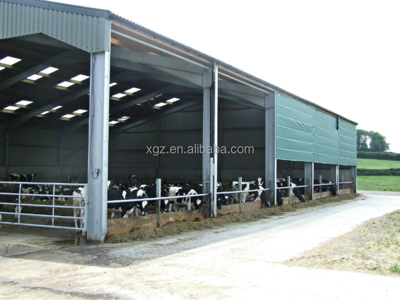 modern advanced automated cow house