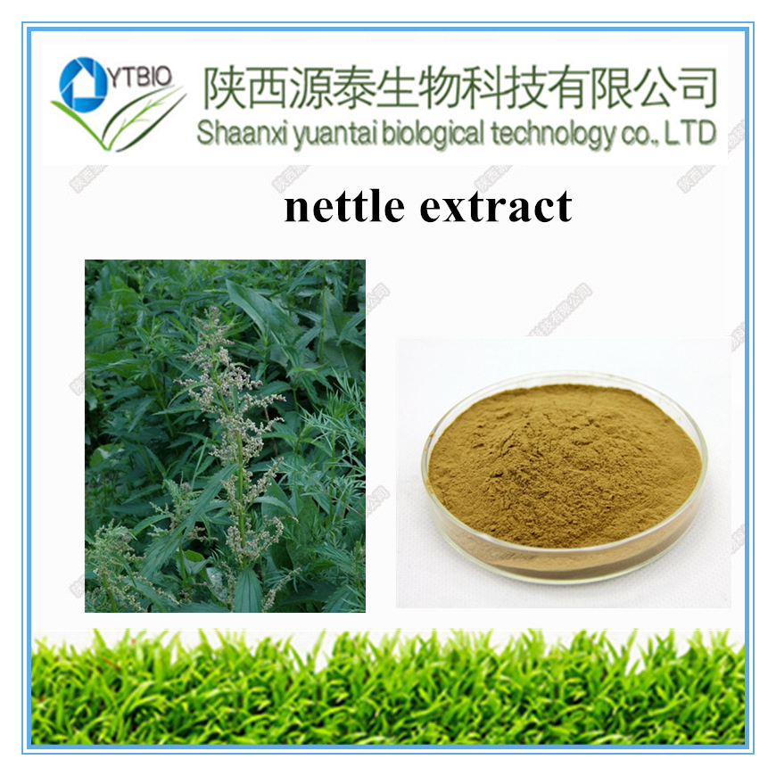 Factory Supply 100% Natural Organic Nettle Root Extract