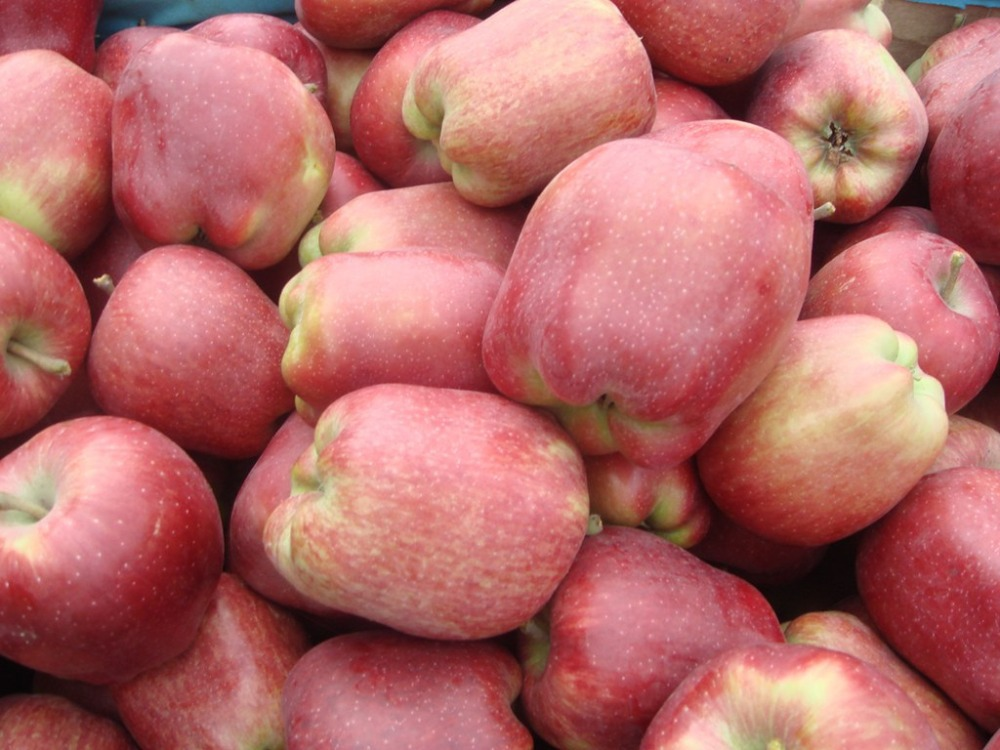 Chinese Red Apple Names All Fruits