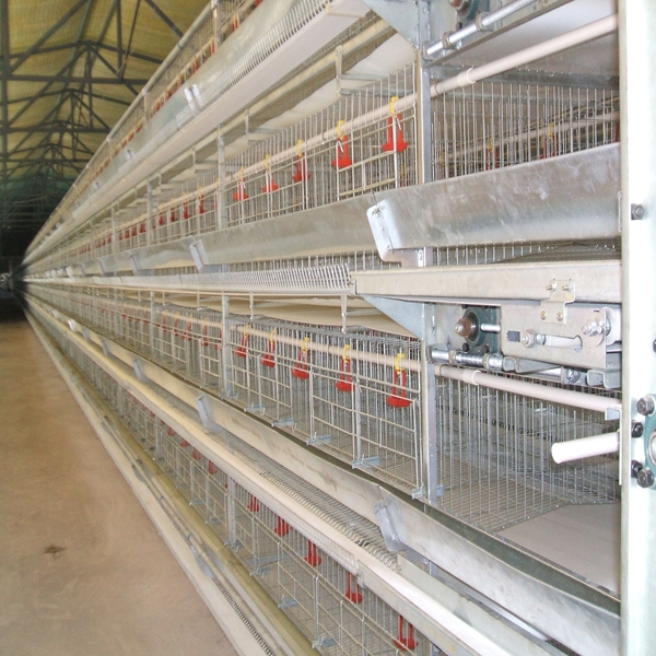 3 Tier Poultry Equipment Broiler Cage