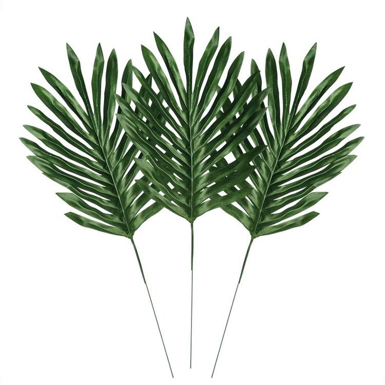Пальмовая ветвь для букетов условия хранения, цветов области ростов