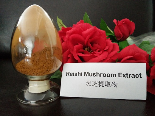 Chinese Traditional Medicine Extract, Reishi mushroom extract powder polysaccharide CAS57-87-4,Ganoderma lucidum Karst. powder