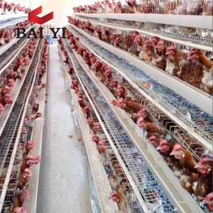 Poultry Farming Equipment In Qatar Poultry Farming