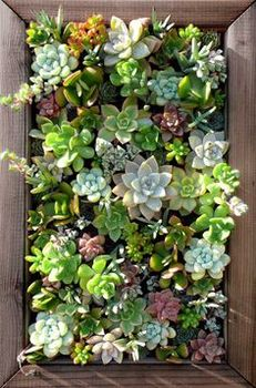 Real Frame Of Vertical Garden Buy Better Homes And Gardens Picture Frames Product On Alibabacom