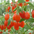 S202 Factory Supply Goji berry seeds for planting