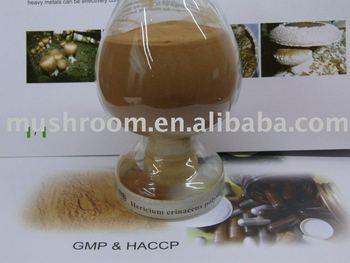 Hericium erinaceus Extract;Lion's Mane mushroom extract,Lion's Mane mushroom powder;Monkey head mushroom; Lion's Mane extract;