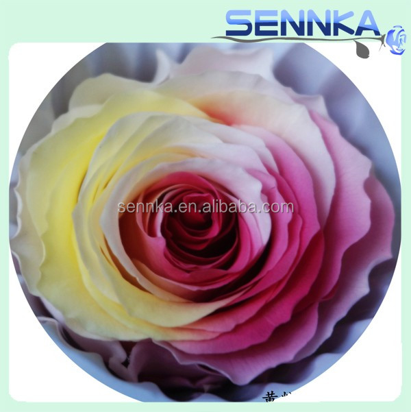 Many Colors Hot Sale Luxurious Preserved Roses Flowers of business with most countries