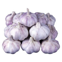 Fresh White Garlic , Purple Garlic better Egypt garlic for wholesale