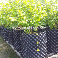 Blueberry plant tree nursery pot/container