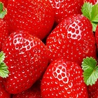 top urgen twant to buy frozen strawberry with competitive price