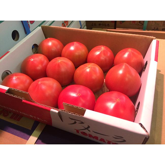 Très doux et frais rouge bon marché tomate fraîche prix du Japon