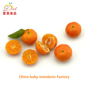 Seasonal China Sweet Fresh Mandarin Orange/Tangerine