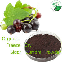 GMP Manufacturer Supply Organic black currant extract powder/blackcurrant extract powder/blackcurrant powder extract
