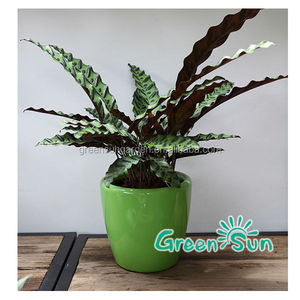 Home decoration plastic plant nursery pot,flower plant nursery,indoor plant nursery