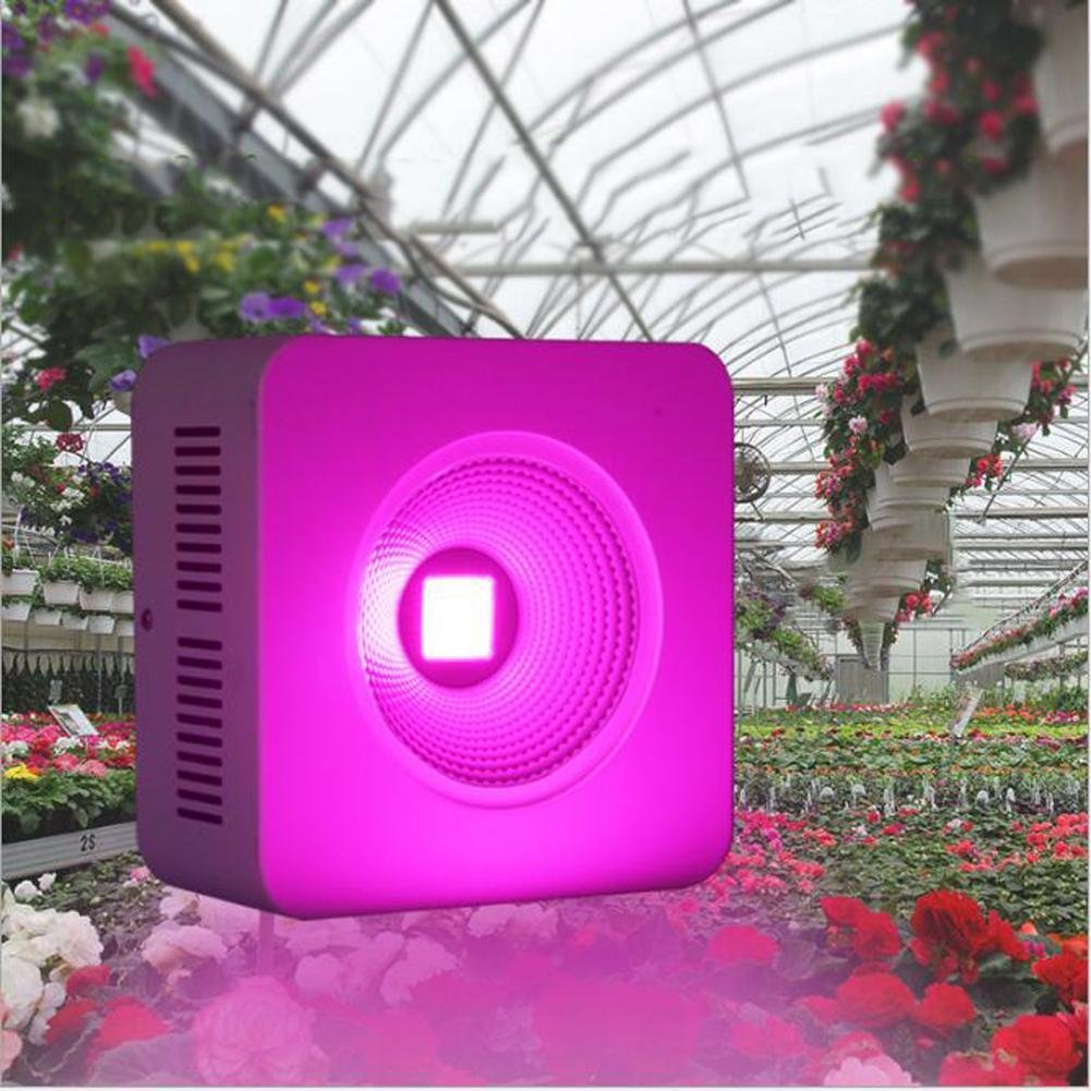 Wei-d Plant Growth Fill Light LED Grow Light for Red Blue Indoor Plant Lights and Hydroponic Full Spectrum 100W Plant Grow Light , 100w