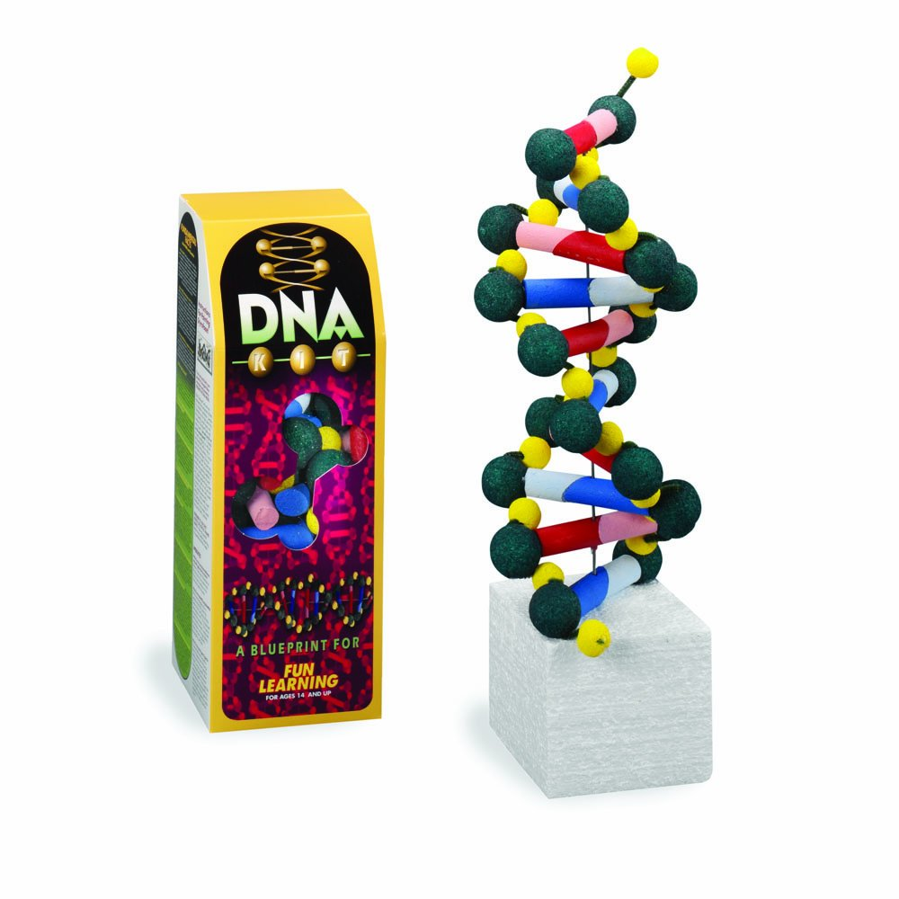 FloraCraft DNA2009/15 Styrofoam Kits, DNA Model Kit, Pre-Painted