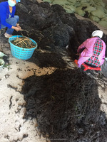 favorable price dried raw seaweed