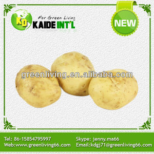 sell potato seed holland crop potato(best quality and price)