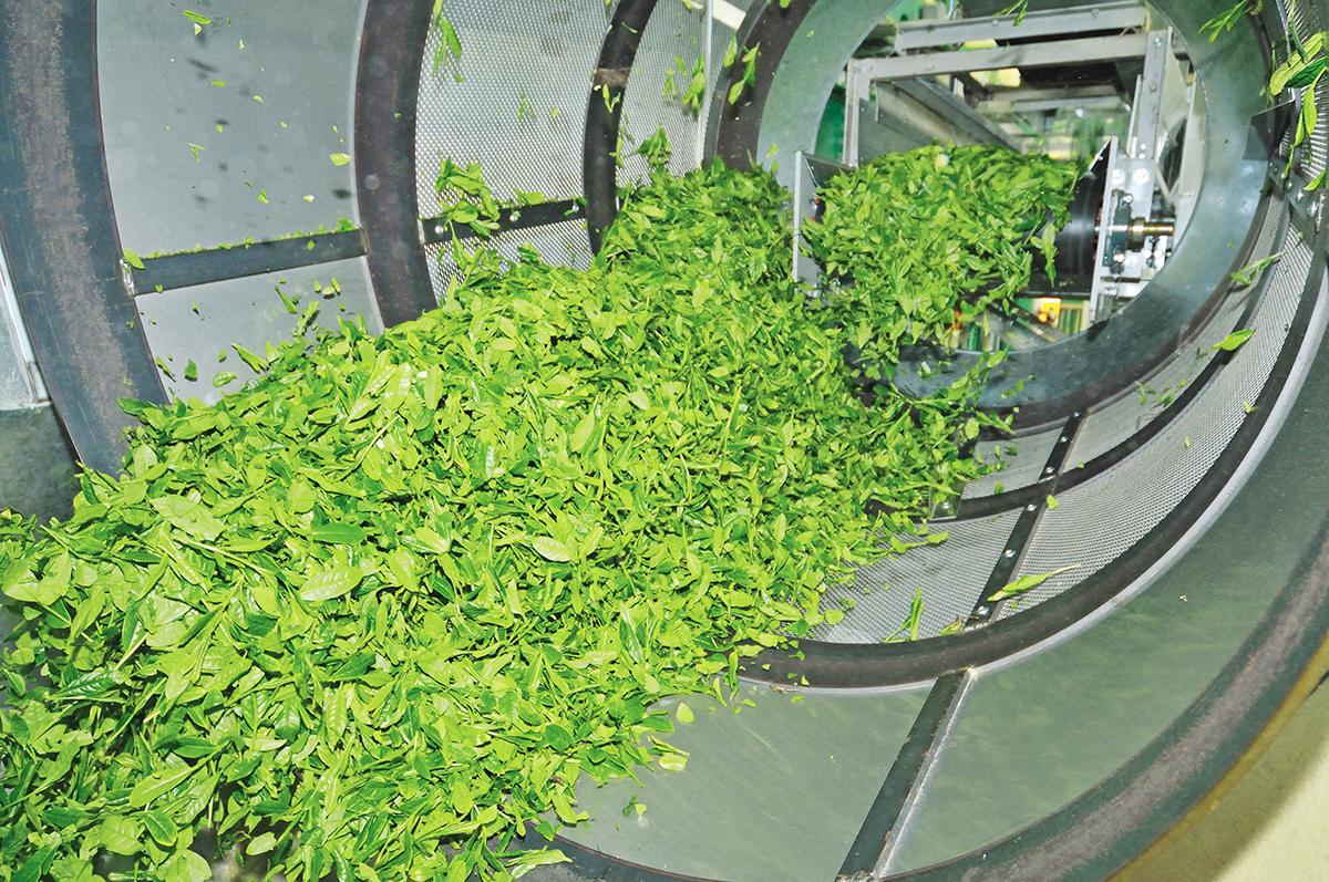 उच्च जापानी कार्बनिक matcha हरी चाय के लिए स्वस्थ