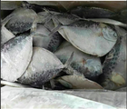 Import Export seafood fish frozen moonfish pomfret fish on sale