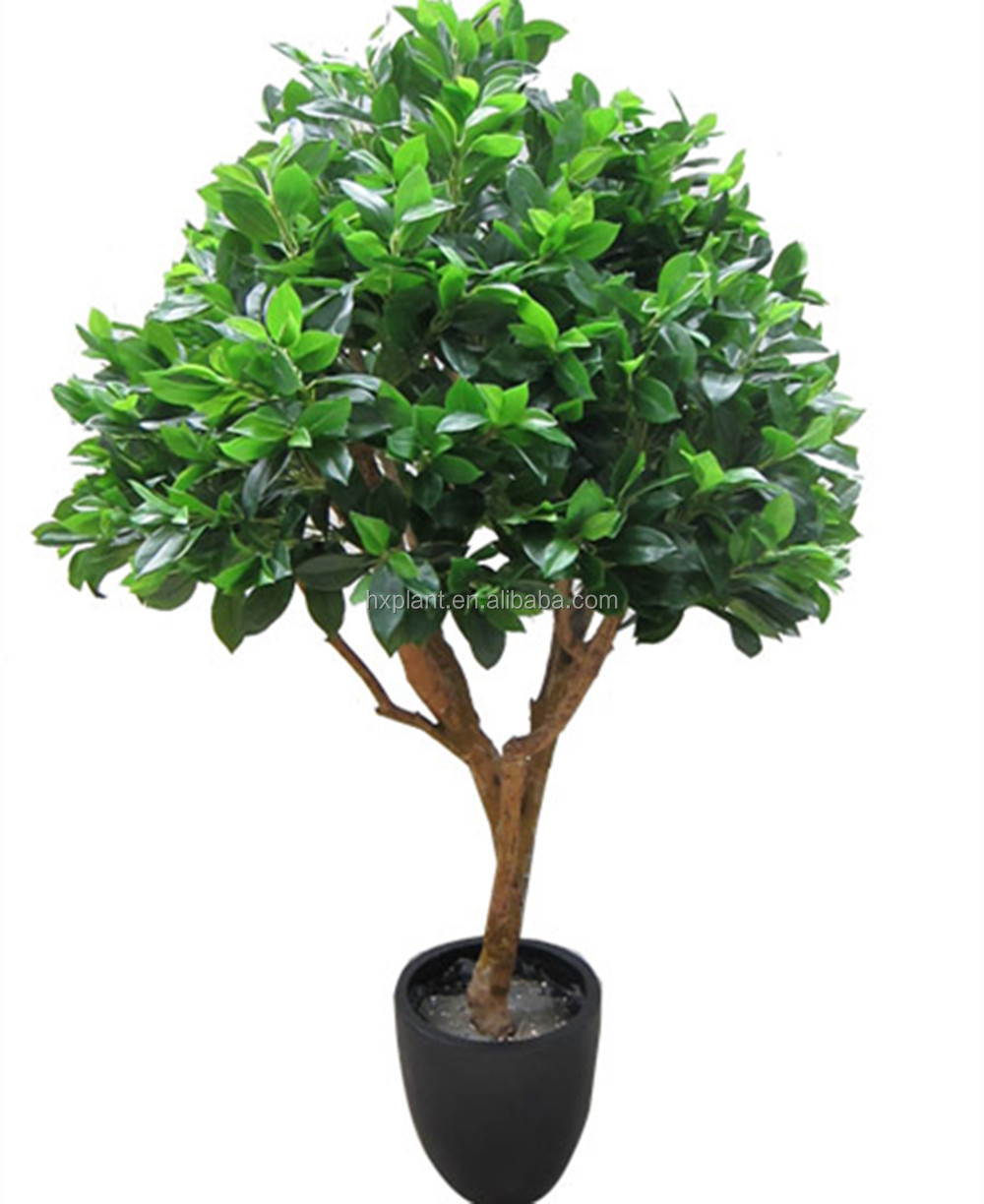 Decorative Indoor Trees Indoor Decorative Bonsai Flower Treeslarge Outdoor Bonsai Trees