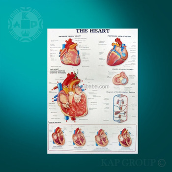 Anatomical Chart,3d Heart Poster,Uv Print Anatomy Of The Heart 3d ...